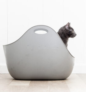 Litterbox with cat inside